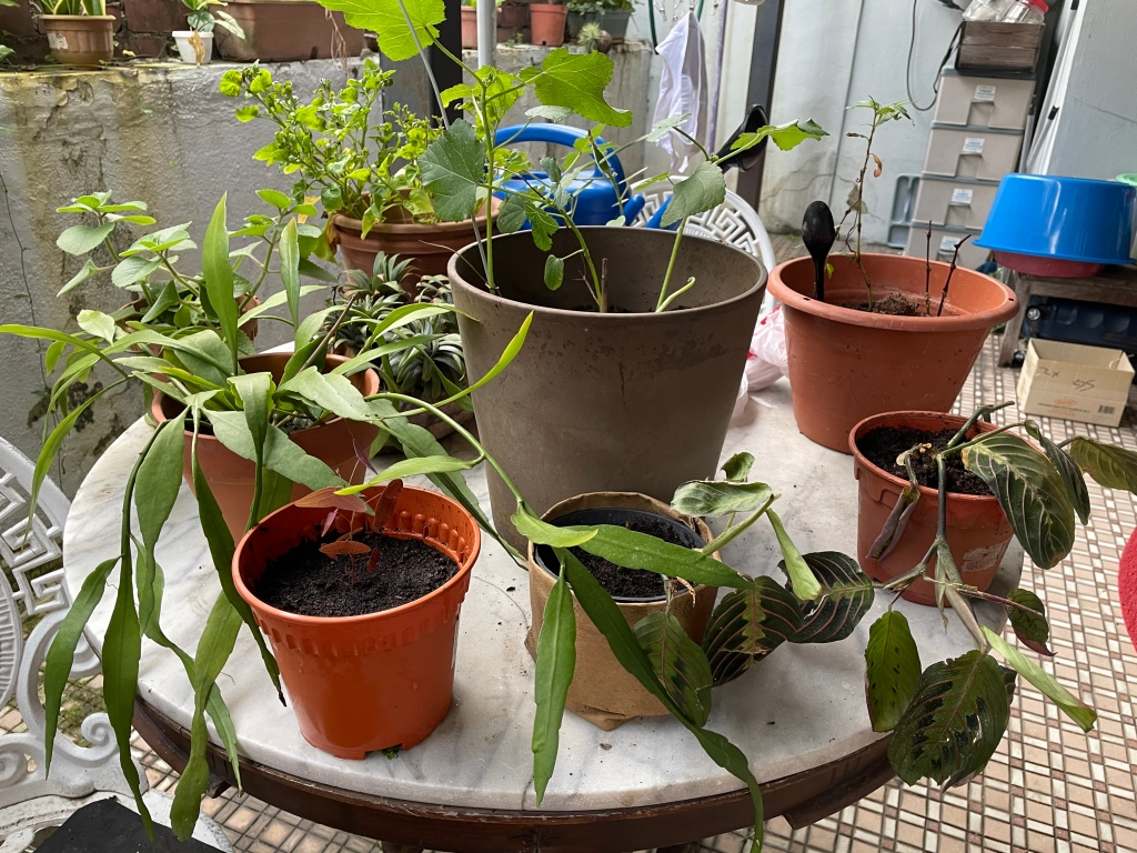 Repotted plants on the table in the backyard